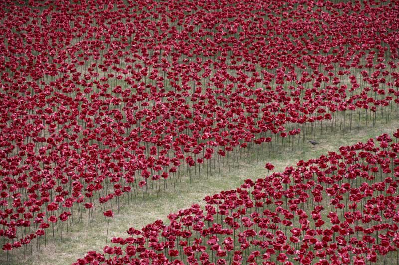 Poppy---Oil-Scariff-via-Getty-Images
