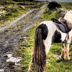 A Wayward Soul – Poetic Expressions from Ireland