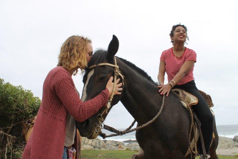 horse - pat