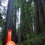 Redwood National Park, California travel photography LED hula hoop