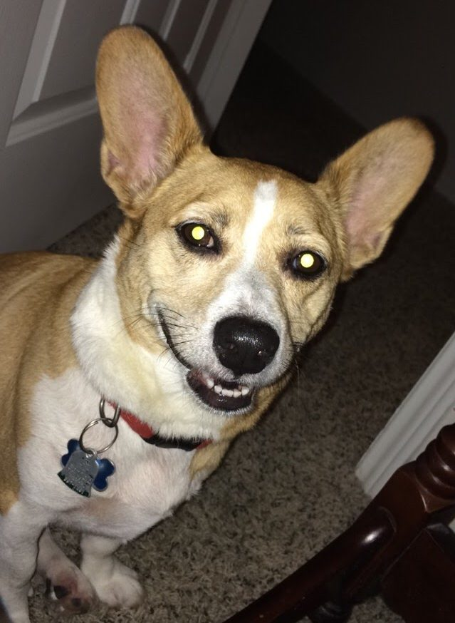 Tucker during one of his rare moments when he smiles for the camera