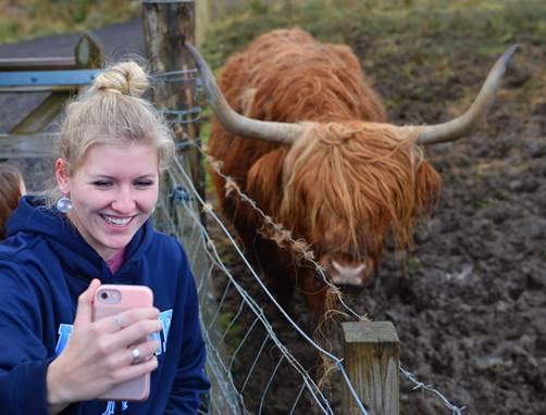 Oxen in Loch Ness