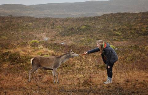Meeting wildlife in Scotland