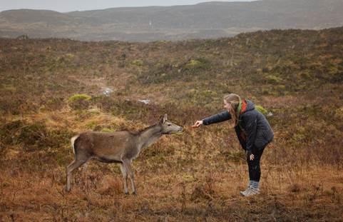 Meeting wildlife in Scotland