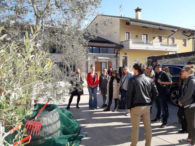 Olive oil tree at Redoro Olive Oil Company
