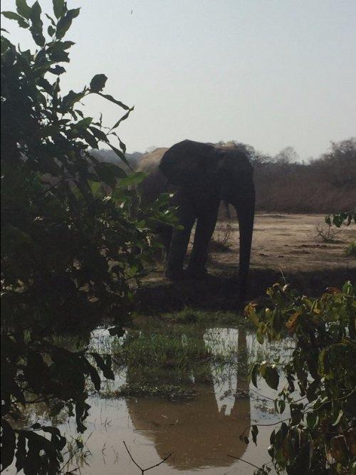 Wild elephants in Mole National Park