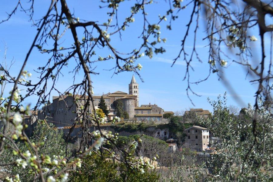 Program Highlight: Study Abroad in Viterbo, Italy