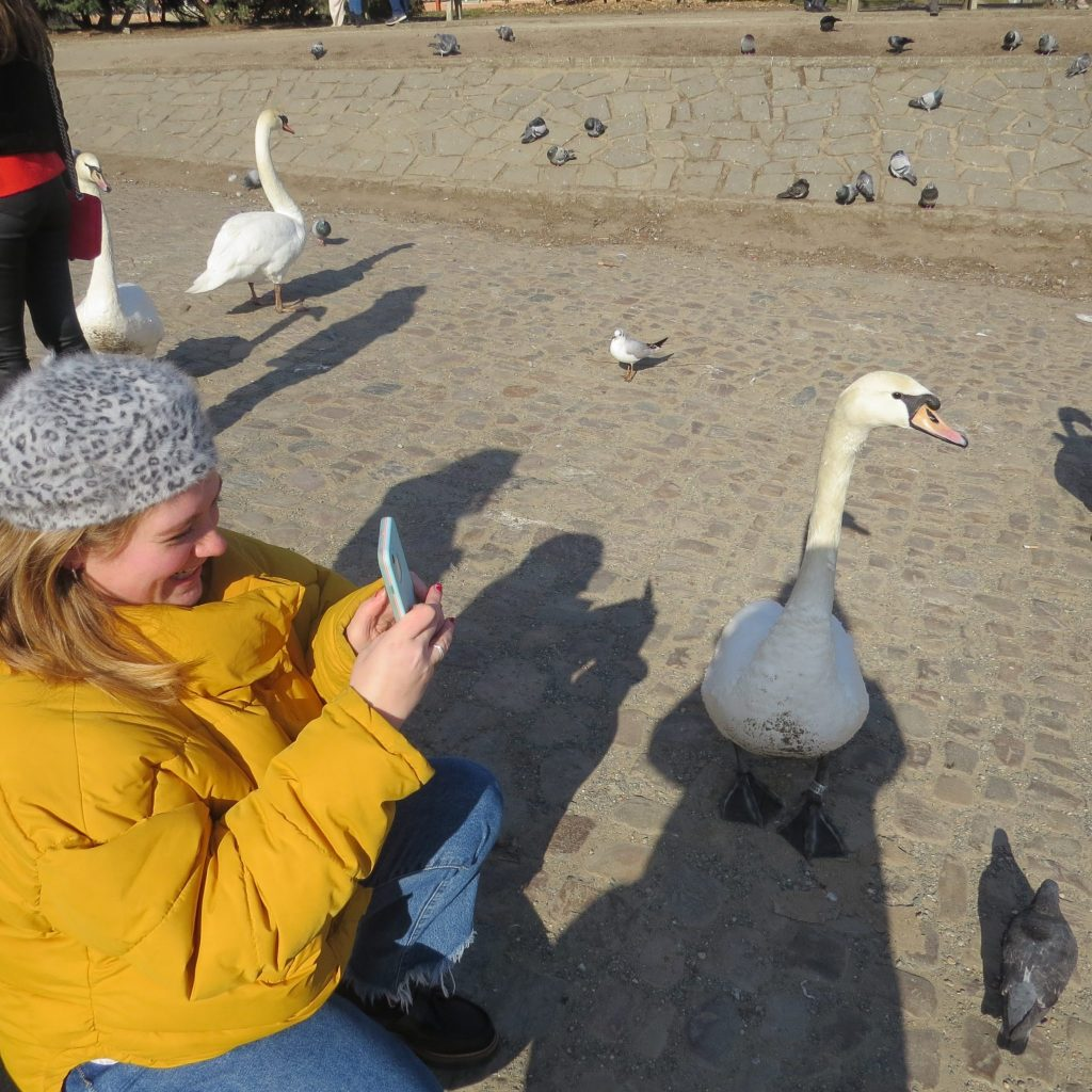 Taking pictures of swans in Prague