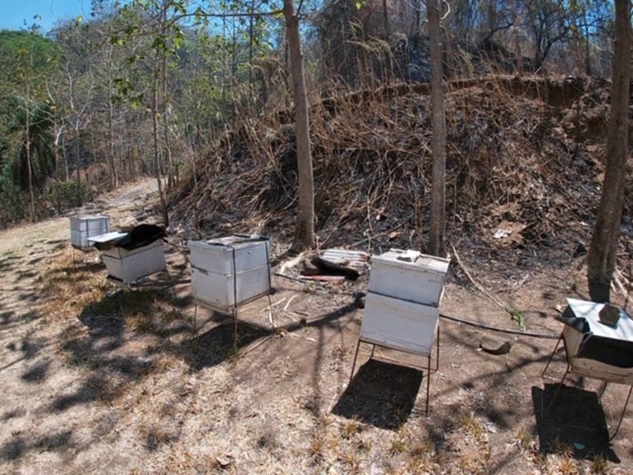 Visiting Africanized bee hives