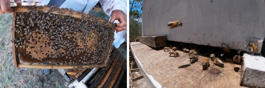 Opening up the beehive