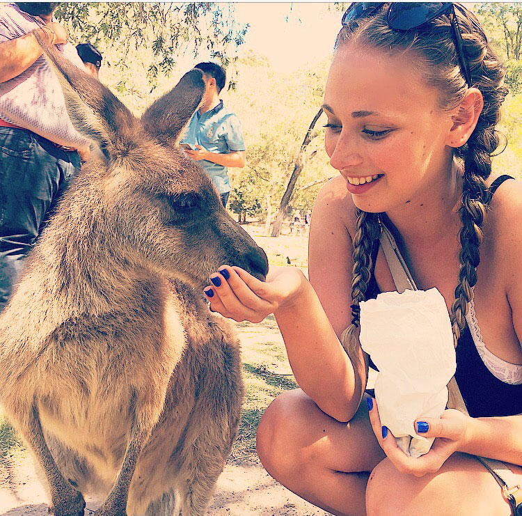 Student feeds a kangaroo during study abroad in Gold Coast Australia