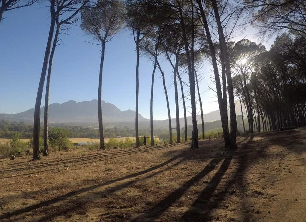 Running through the trees in Stellenbosch, South Africa during USAC Study Abroad