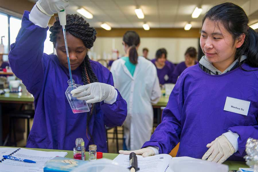 Students partake in STEM courses during a study abroad